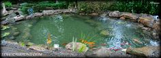 This project was a koi pond renovation we completed in Summer 2013. This pond went from bad to AMAZING! Designed and installed by Full Service Aquatics of Summit, NJ 07901.