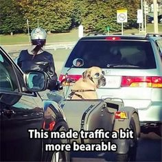 http://www.dumpaday.com/funny-animals/funny-animal-picture-dump-day-26-pics-23/