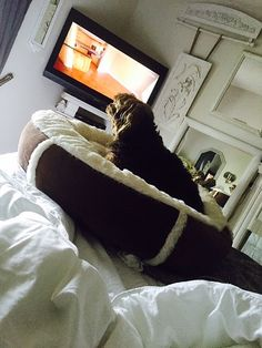 This Yorkie Loves His New Bed! He Can See The Television Just Fine!