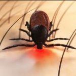 Lyme is nou typisch een ziekte die multi diciplinair moet worden aangepakt! Gelukkig zijn er best mogelijkheden, denk o.a. aan Fotonen therapie in combinatie met bioresonantie therapie
