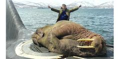 Today's already peaked. RT @pickover: A walrus was discovered asleep atop a Russian submarine. http://bit.ly/1vCagA2