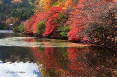 長野縣北八岳白駒池---日本秋天的象徵:火紅的楓葉和金黃的銀杏 | nippon.com 日本網
