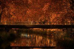 Toulouse en automne : le canal du midi / Canal du Midi in the fall, in Toulouse, France © Ville de Toulouse - P. Nin #visiteztoulouse