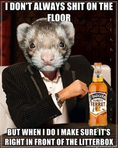 Oh, the ferrets and their litter boxes.
