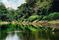 Memorable and excited #Amazon_jungle_tours with extensive facilities in Peru at reasonable prices! http://www.amazonadventureperu.com