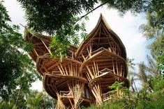 Une New-Yorkaise d'origine indonésienne a fait le pari fou de construire des maisons exclusivement faites de bambou. Cinq ans après s'être lancée dans l'aventure, la jeune femme est aujourd'hui à la tête d'Ibuku, une compagnie 100% écolo, qui a fait sortir de terre un village entier de superbes cons