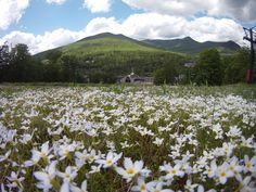 Spring wildflowers!