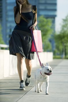 Best Leashes for Your Dog #animals #fcpets