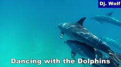 Dj. Wolf: Dancing with the Dolphins