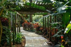 The Secret Garden In Florida You're Guaranteed To Love - This beautiful oasis hiding in the middle of St. Petersburg is more than - Old Florida, Tampa Florida, Florida Vacation, Florida Travel, Clearwater Florida, Visit Florida, Naples Florida, Beach Travel, South Florida