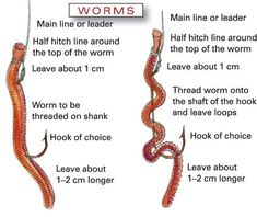How to string a worm on a fishing hook Fishing Fishing tips Fishing gear Fishing hacks Fishing lures bass Fishing Fly Fishing SAltwater Fishing Freshwater Fishing. Fishing Worms, Trout Fishing Tips, Fishing Rigs, Fishing Knots, Carp Fishing, Saltwater Fishing, Fishing Tackle, Fishing Pliers, Fishing Stuff