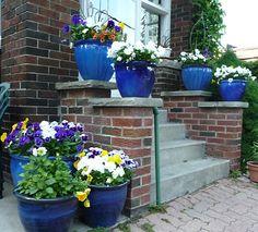 blue pots outdoor | garden / Cobalt Blue Flower Pots. Love them!