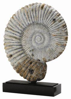 ARTERIORS Home Fossil Shell Sculpture