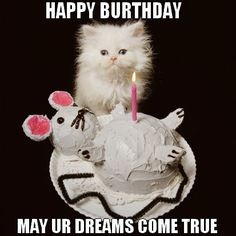 Birthday Messages Memes Cat Wishes Kitty Happy