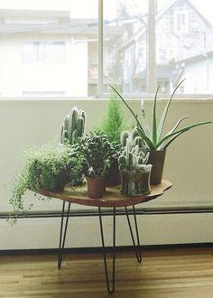 Jardin d'intérieur : une jungle dans ma maison - 100 Idées Déco