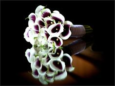 Beautiful and simple Calla lily bouquet