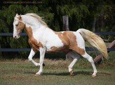 Tennessee Walking Horse - Gold Champagne - by *venomxbaby @ Element Photo