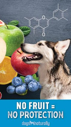 If you skip feeding #fruits and #vegetables, or just wonder if your #dog really needs them, you should probably read today's post ... via: #DogsNaturally