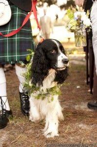 Dog ring Bearer Collar