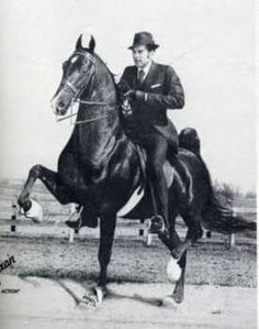 Jamestown was an American Saddlebred stallion.  He was sired by CH Yorktown.