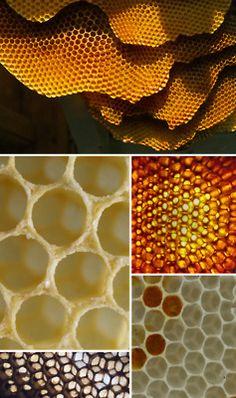 honeybee comb & cells