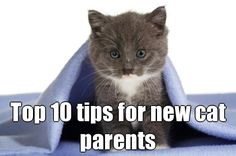 Top 10 tips for new cat parents - great tips for anyone considering adopting a new feline friend this summer! Just in time for Adopt-A-Cat Month and our huge cat/kitten adoption special this June!