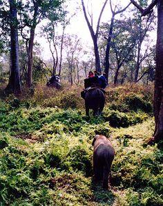 Elephant safari at Jaldhapara (Jaldapara) rhino sanctuary Photo Maps, Bradley Mountain, Safari, National Parks, Wildlife, Elephant, Indian, Landscape, Travel