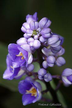 ~~blue flowers by Thelma Gatuzzo~~