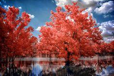 Las Mejores Fotografías del Mundo: Fantasticas fotografias con filtro Infrarojo.