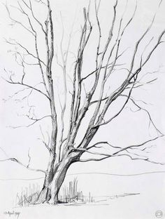 pencil drawings trees | tree ii atherton warks drawings cr108 1987 pencil drawing on paper 35 ...