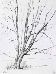 pencil drawings trees | tree ii atherton warks drawings cr108 1987 pencil drawing on paper 35 ...