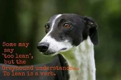 "Some may say ""too lean"" but the greyhound understands.  ""To lean"" is a verb."