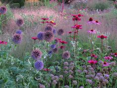 Signature planting: Piet Oudolf (list of projects) – Echinops bannaticus, Echinacea purpurea, Allium Summer Beauty Source by viscountdegrey Prairie Planting, Prairie Garden, Meadow Garden, Garden Cottage, Dream Garden, Lake Garden, Planting Plan, Garden Sofa, Beautiful Gardens