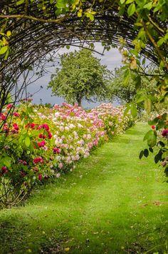 Golf Courses, Wordpress, Roses, Plants, Farm Shop, Pictures, Pink, Rose, Flora
