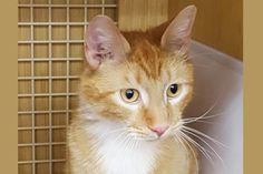 Tyler has been adopted from Petco in Renton, a Seattle Humane satellite location. http://www.seattlehumane.org/adoption/cats