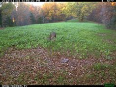 How to Get Closer To A Mature Buck With Food Plot Design Hunting Land, Hunting Tips, Deer Hunting, Hunting Stuff, Deer Habitat, Food Plots For Deer, End Of The World, Habitats, Closer