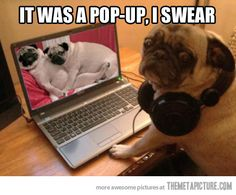 So this is what Frank aka Agent F does when he's away from the MIB - crazy pics / funny laptop dogs