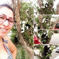 Alisson diz: vá ver onde sua gata tá deitada lá fora... Dai descobri quem anda quebrando minhas orquídeas! Filha da putinha mais não adianta eu amo muito  #gata #cat #abigail #amor #fofa #naarvore #gatonaarvore #orquideas #selfie by milamoraesleite http://www.australiaunwrapped.com/