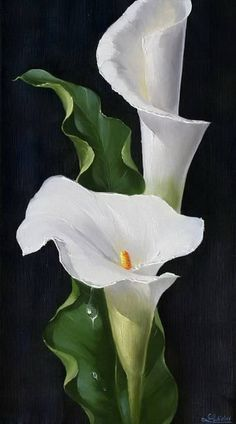Wonderful Absolutely Free Calla Lily painting Thoughts Calla lilies will be the essential bridal bouquet flower. The actual lamps of this Africa bloom usua Lys Calla, Calla Lillies, Calla Lily Flowers, Lily Painting, China Painting, Watercolor Flowers, Watercolor Paintings, Watercolour, White Flowers