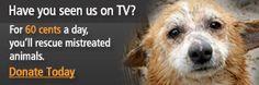 Join Us for Massachusetts Lobby Day for Animals 2014 | ASPCA