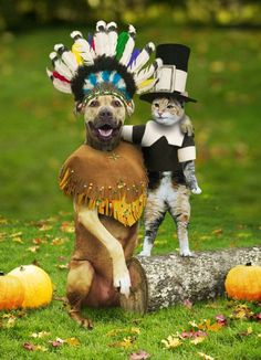 Funny Cat Pictures -  and Dog in Vet Waiting Room - Happy Thanksgiving