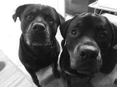What's your problem!?  #ilcucchiaiodianita #weekend #summer #instarottie #instarottweiler #rottweiler #rottweilersofinstagram #rottie #puppy #love #instadog #pic #picoftheday #instadaily #iphoneonly #iphonesia