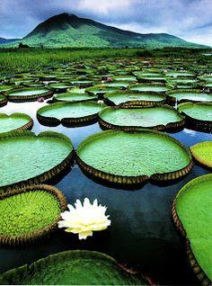 Pantanal Conservation Area, Brazil - a UNESCO World Heritage area