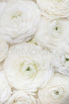 KATEMAXSTOCK Styled Stock Photo #818