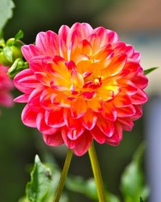 From the Endless Summer Flower Farm