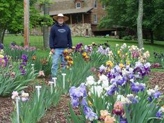 How irises grow Garden Bulbs, Planting Bulbs, Garden Plants, Planting Flowers, Iris Garden, Lawn And Garden, Deer Resistant Landscaping, Growing Irises, Flower Bed Designs