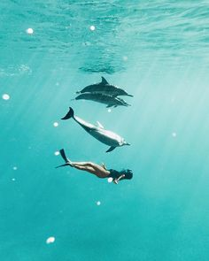 I've never felt more like a dolphin 😜🐬💦 would you swim with these cuties! Beach Aesthetic, Summer Aesthetic, Travel Aesthetic, Underwater Photography, Adventure Is Out There, Ocean Life, Sea Creatures, Summer Vibes, Weekend Vibes