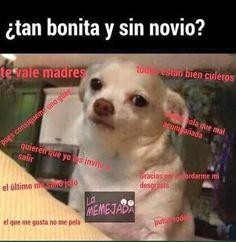 Tan bonita y sin novio #memes #perrito #paraquenaci