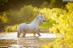 Russian horse breeds | Equine photography by Ekaterina Druz