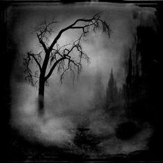 I just kinda like these pictures of misty forests and stuff...  #dark #creepy #gothic #black #eerie